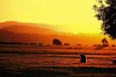Narawntapu Park sunset