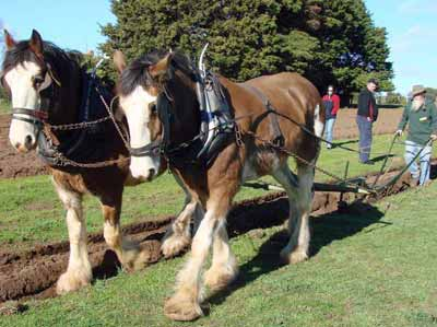 Horse-Plough