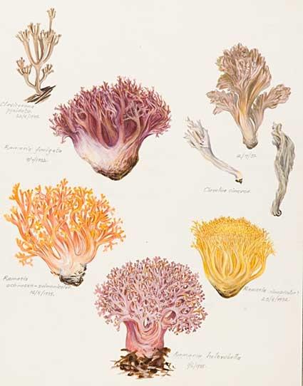 fungi-coral.jpg