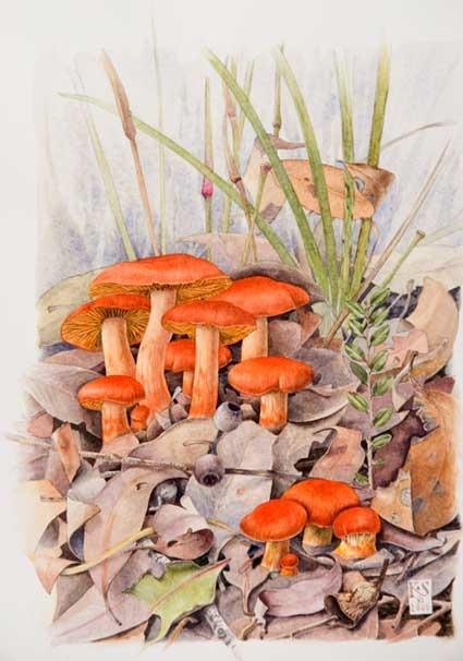 fungi-tangerine.jpg